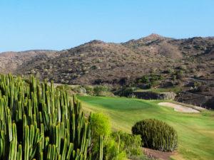 Spain – 'Birdies in the Canaries'