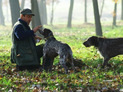 Italy – 'White Truffles of Piedmont'